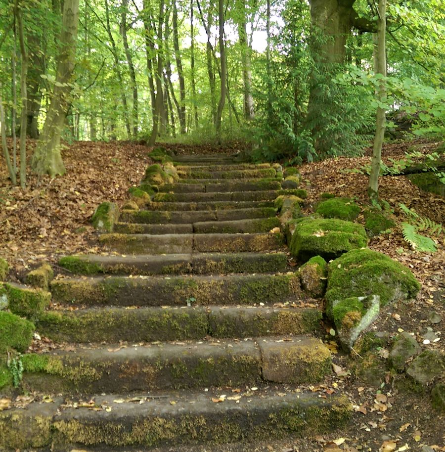 Picture of Steps All Together